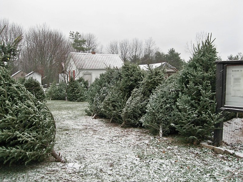 Christmas Trees at the Farm | Museum of Western Reserve Farms ...